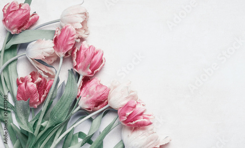 In de dag Tulp Pretty pastel tulips flowers with water drops on white background, top view, flat lay with copy space for your design. Layout for greeting card