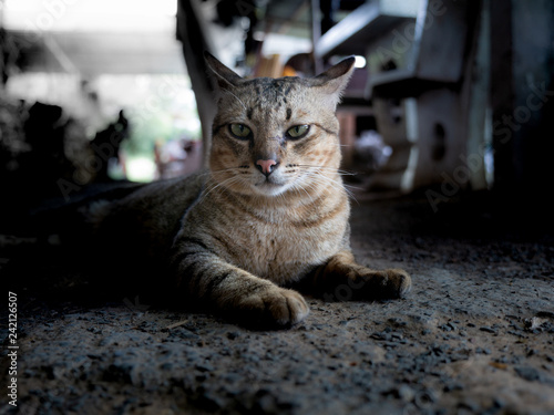 Photo  Tabby Cat Lying on The Ground
