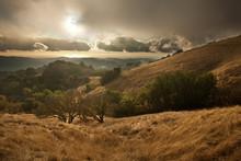 Hillsides Of Coastal Central California Glisten Gold After The Season's First Rain