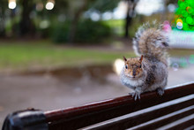 Seated Squirrel 1