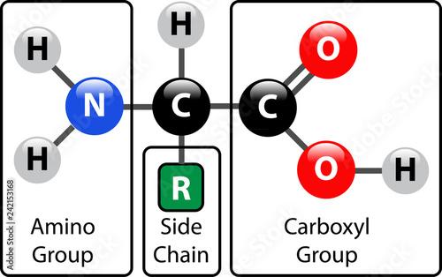Photo Amino Acid Structure