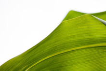 Corn Leaf Texture Background
