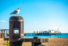 One Beautiful Seagull Standing...
