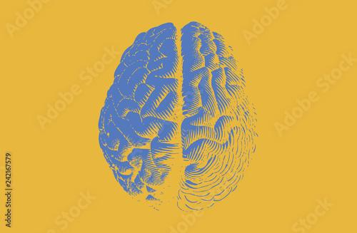 Fotografie, Tablou  Blue engraving brain on yellow BG