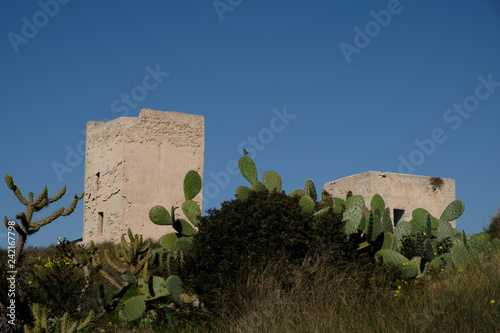 Photographie  Prickly pear Opuntia cactus (ficus-indica) and Castle of San Michele in Cagliari