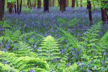 Green Ferns Growing In A Blue ...
