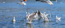 Seagulls Flying At Beach.Flyin...