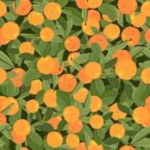 Orange Mandarin Tangerine With Green Leaves On Dark Background. Seamless Pattern. Juicy Exotic Citrus Fruit Harvest.