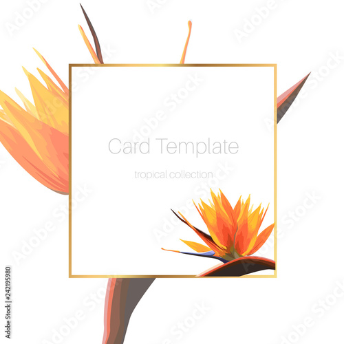Exotic tropical bright orange strelitzia bird of paradise flower. Card banner flyer cover square border frame template.
