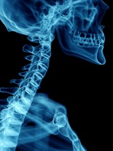 Illustration Of A Man's Cervical Spine