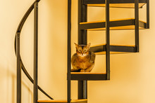 Beautiful Cat Standing In The ...