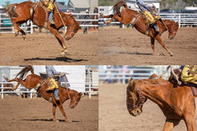 Cowboy Riding Bucking Bronco C...