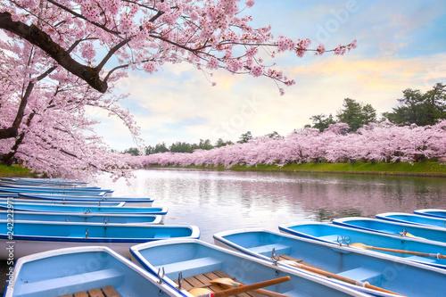 Poster Lieu connus d Asie Full bloom Sakura - Cherry Blossom at Hirosaki park in Japan