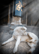 """Dog In Old Chinese House. The Character In The Photo Means """"home""""."""
