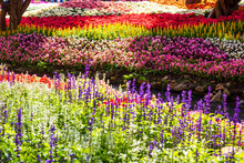 Beautiful Garden Of Colorful F...