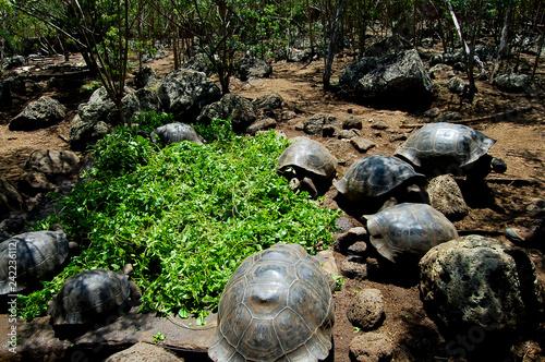 Fotografía  Giant Tortoises - Galapagos - Ecuador
