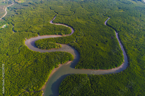 Poster Rivière de la forêt Green deep mangrove forest sea bay morning sunrise eco nature system