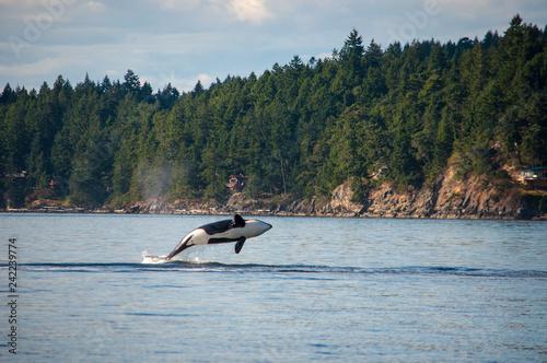 Fotografie, Obraz A whale of a time