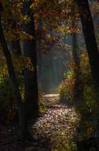 Autumn/ Fall Sunlit Path Through The Woods.  Starved Rock State Park, Illinois, USA.