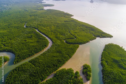 Poster Abou Dabi Green deep mangrove forest sea bay morning sunrise eco nature system