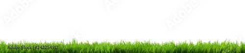 Poster Gras grass isolated on white background