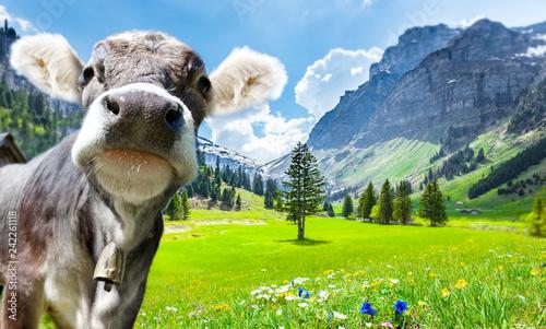 Naklejki krowa  krowa-w-alpach