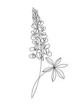Lupine Flowers Line Art