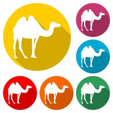 Camel Icon Silhouette Logo, Co...