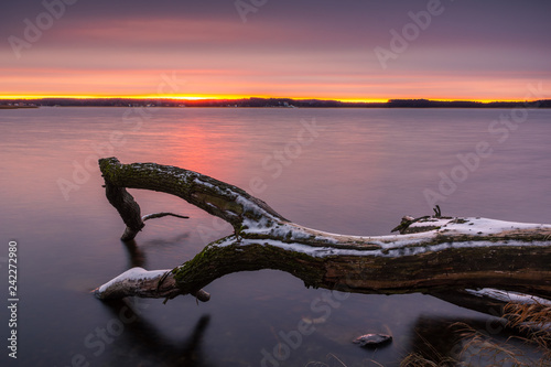 Türaufkleber Lachs Tree on frozen Swiecajty lake near Wegorzewo, Masuria, Poland