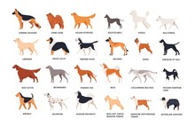 Set Of Dogs Of Different Breeds Isolated On White Background. Collection Of Purebred Pets, Domestic Animals Or Doggies Of Various Types. Side View. Colored Vector Illustration In Flat Cartoon Style.