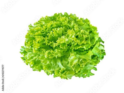 Obraz Batavia lettuce salad rosette - fototapety do salonu