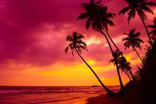 Tropical Sunset Palm Trees Landscape