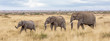 Three elephants in the Masai mara