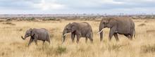 Three Elephants In The Masai Mara