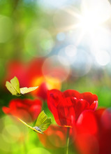 Abstract Nature Spring Background; Flowers And  Fly Butterfly