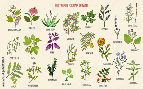 Photo  Best medicinal herbs for hair growth