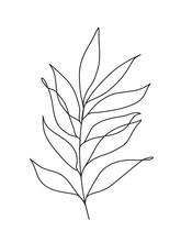 Simple Eucalyptus Leaves