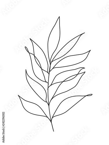 simple eucalyptus leaves Fototapete