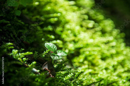 Fotografía  Seedlings in nature.