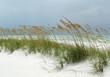 Sea Oats on White sand Beach