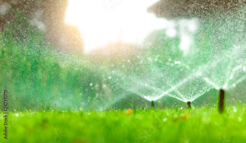 Poster Garden Automatic lawn sprinkler watering green grass. Sprinkler with automatic system. Garden irrigation system watering lawn. Water saving or water conservation from sprinkler system with adjustable head.