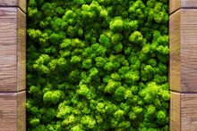 Green Moss Backgruond Close Up Interior Design. Top View Close Up