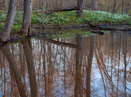 Photo 506-71 Spring Reflections