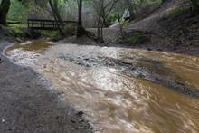 Muddy Creek After Storm And Heavy Rain, Rancho San Antonio County Park, South San Francisco Bay, California