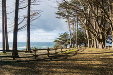 View Towards The Pacific Ocean From The Cypress Forest, Fitzgerald Marine Reserve, Moss Beach, California