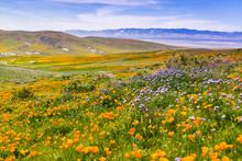 Wildflowers Blooming On The Hi...