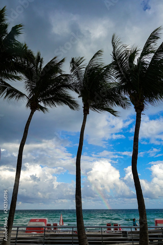 Palm Tree in a beach with blue sky and a rainbow