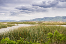 Wetlands In Alviso Marsh, Don Edwards Wildlife Refuge, South San Francisco Bay, California