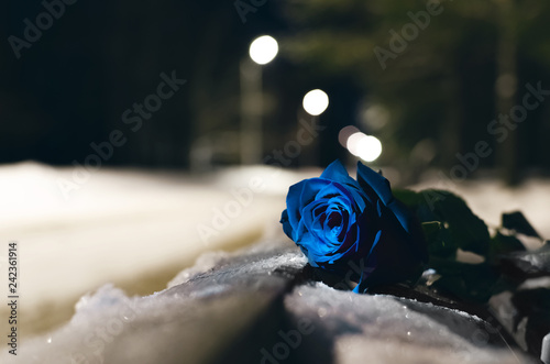 Photo Forgotten blue rose flower laying in a snow covered bench in a night winter park background