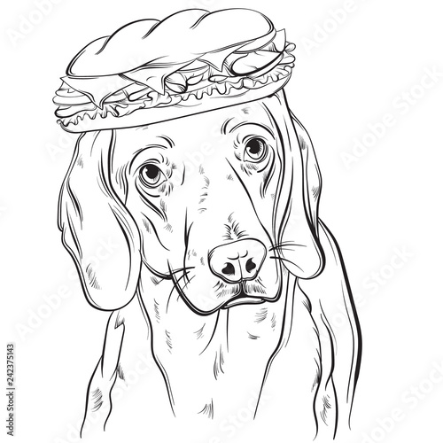 Vector hand drawn realistic illustration of beagle with